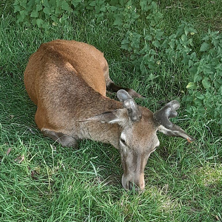 Jeremy Bartys deer